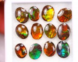 15.82ct Canadian Ammolite / Ammonite Lot D134