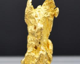 Pépite d'or naturelle 34.1 gr -Or natif - Natural nugget - Maripasoula, Guy