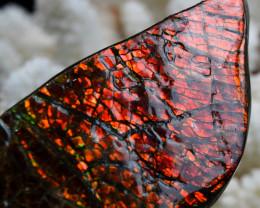 Ammolite 249,5 cts - Lethbridge, Alberta, Canada