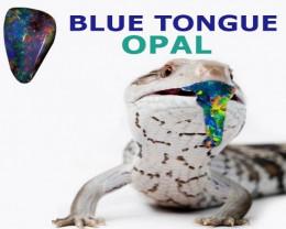 bluetongueopal