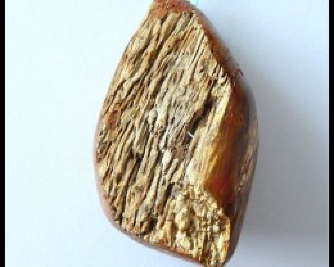 healing stones petrified wood