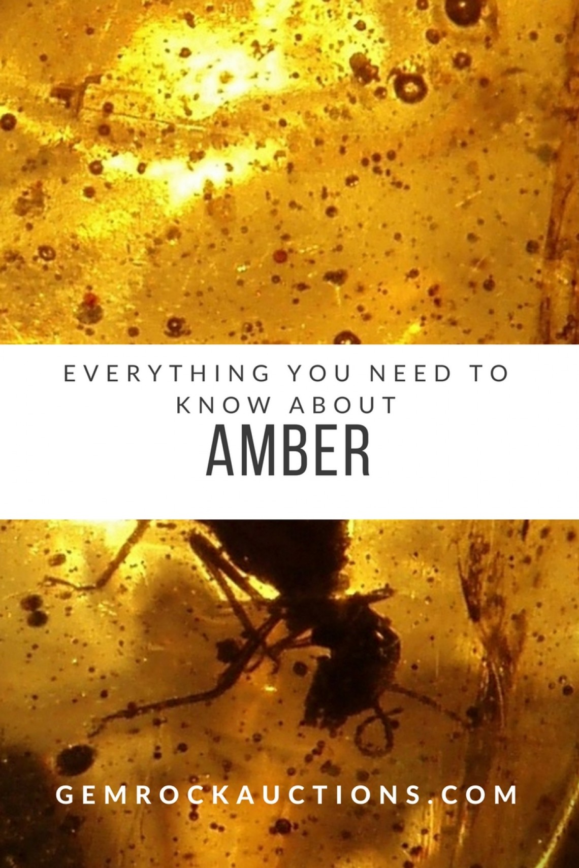Amber Information