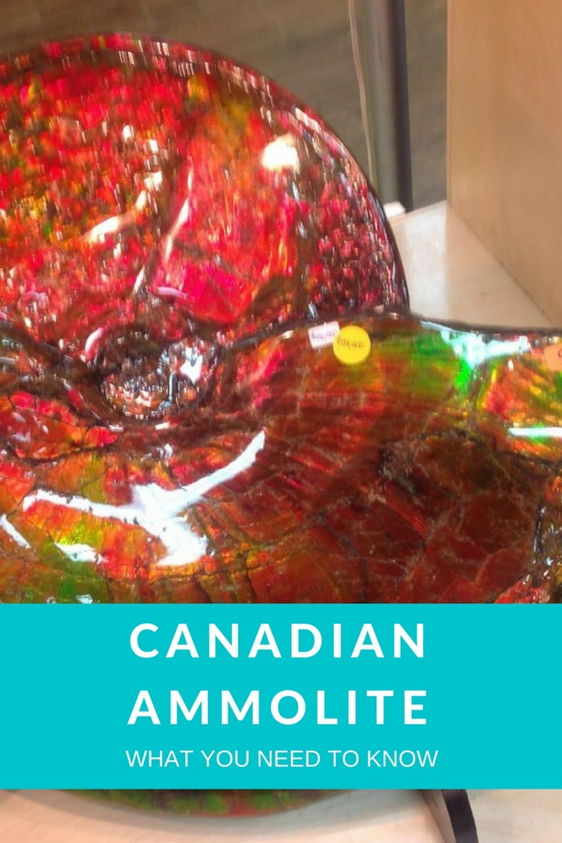 Canadian Ammolite - From Creature To Gemstone