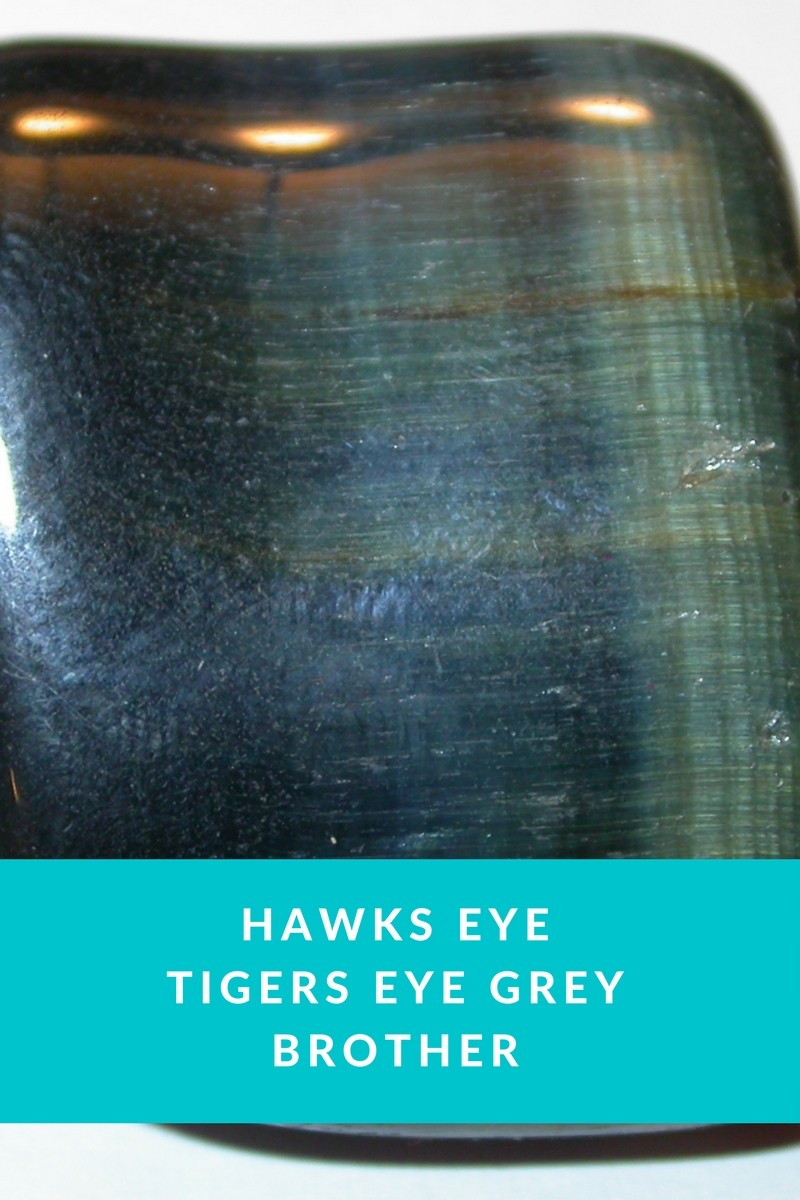 Hawks Eye - Tiger Eyes Grey Brother