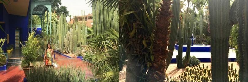 morocco dinosaur fossil and Le Jardin Majorelle