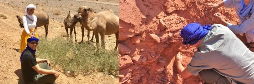 fossil hunting safari morocco