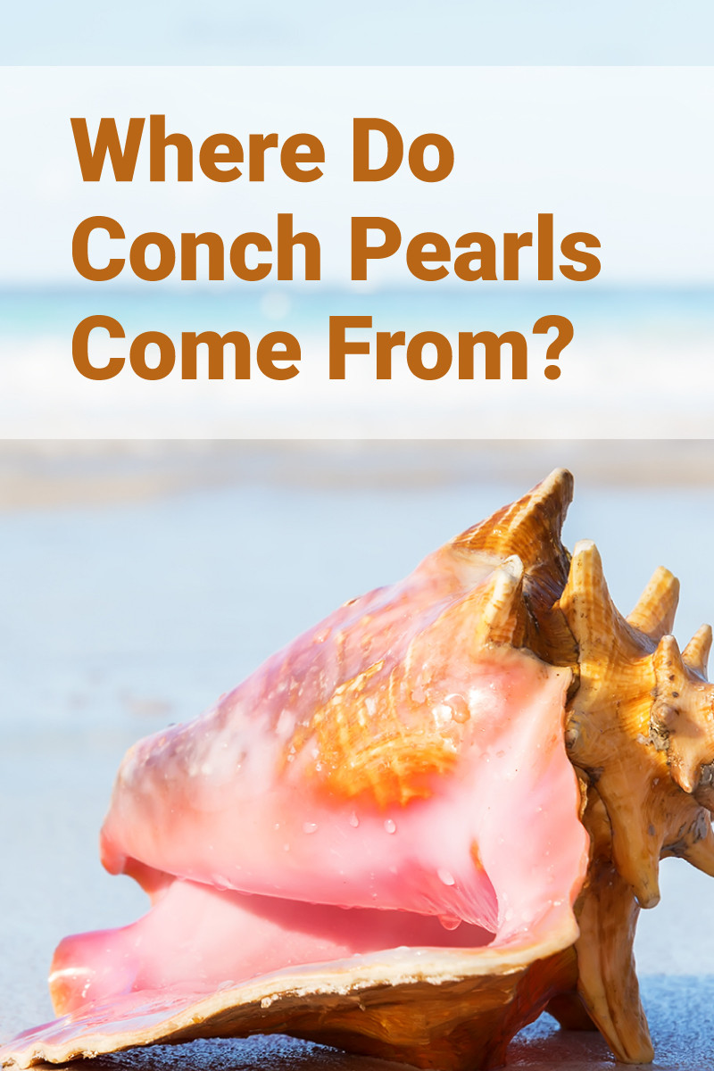 Where Do Conch Pearls Come From