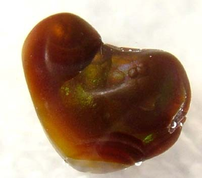 (MGW) FIRE AGATE SPECIMEN  15CTS FP 825