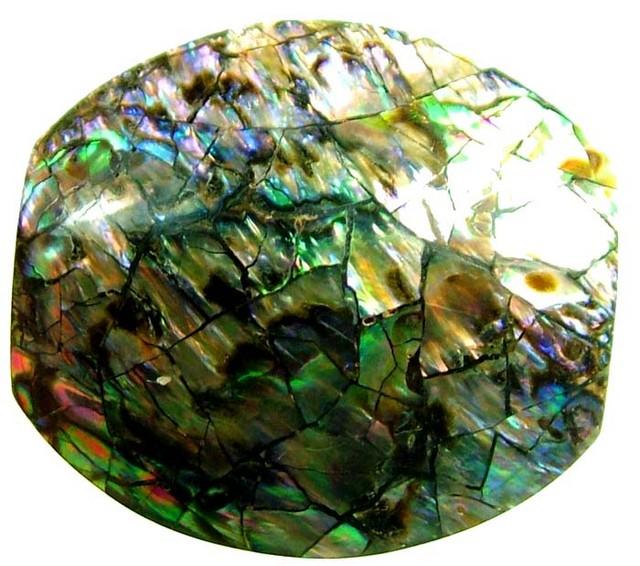 PAUA SHELL BEAD-VIBRANT 21.05 CTS [ST781 ]