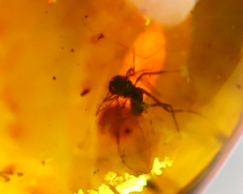 Baltic Amber 2.52Ct Natural Poland Fossil Insect inside Amber EN38