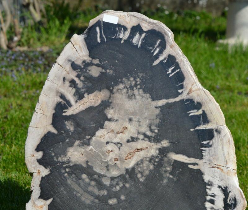 Tranche - Bois Fossile 11300 grammes - Bogor, West Java Province, Indonesie