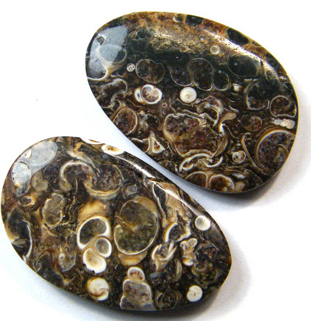 FOSSIL CRINODIS  BEAD DRILLED  90.90 CTS [MX4078]