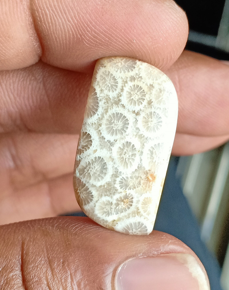 14 CT  FOSSIL CORAL  100% NATURAL GEMSTONE VA1305