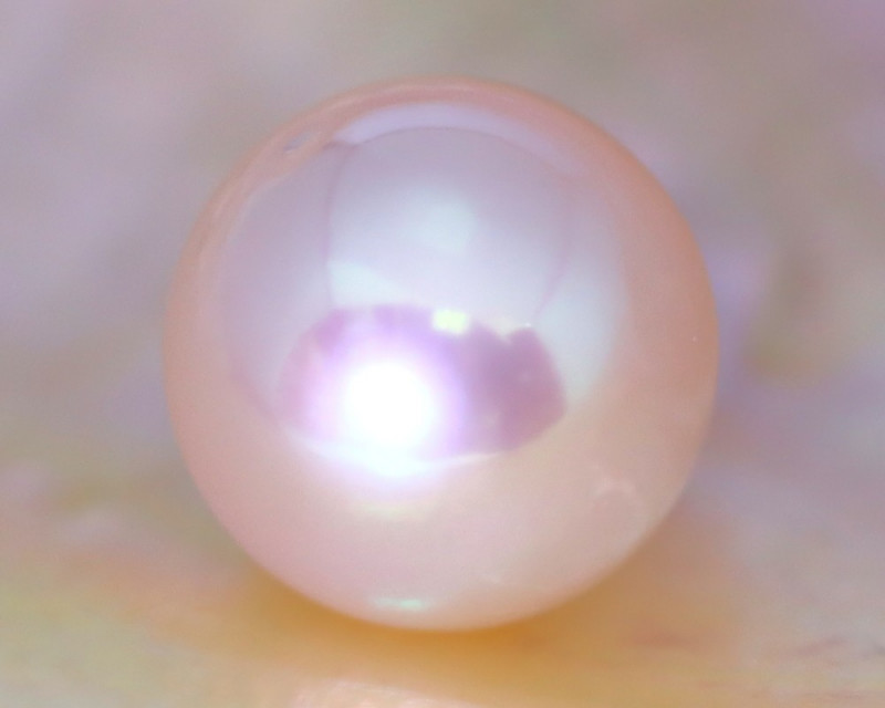 11.4mm 10.55Ct Natural Japan Akoya Creamy White Color Pearl C0325