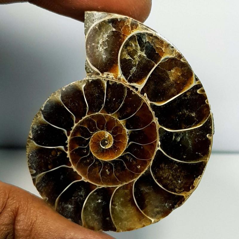 105.04 ct Natural Ammonite Fancy Cabochon  Gemstone