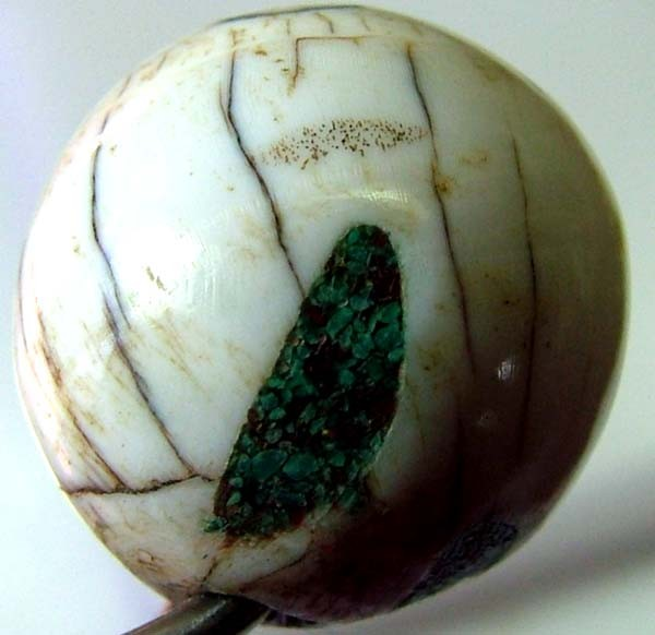 SHELL BEAD 29 CTS    AS-2146