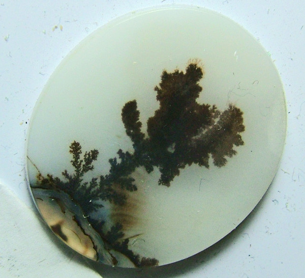 AGATE DENDRICTIC NICE PATTERNS 12 CTS  SG- 451