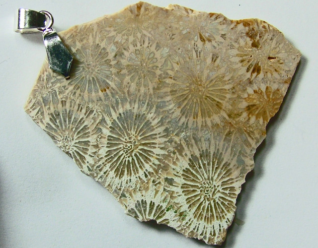 FOSSIL CORAL PENDANT65.15  CTS SG-509