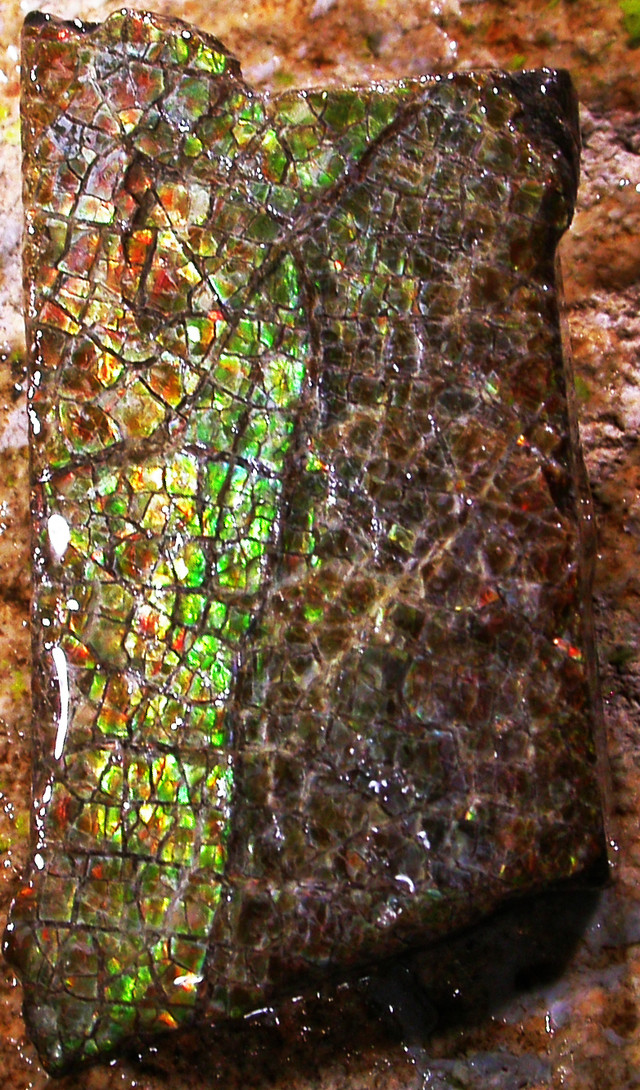 AMMOLITE  ROUGH SPECIMEN FROM CANADA 34.30 CTS [F 1763]