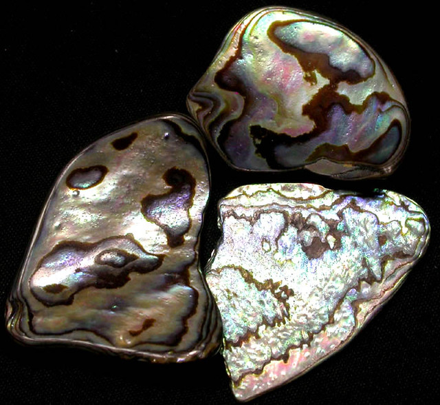 AUSTRALIAN ABALONE SHELL  PARCEL 30.70 CTS [PF 1289]
