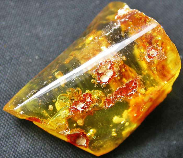AMBER WITH TERMITE INSECT-COLOMBIA 12.50 CTS [MX8094]