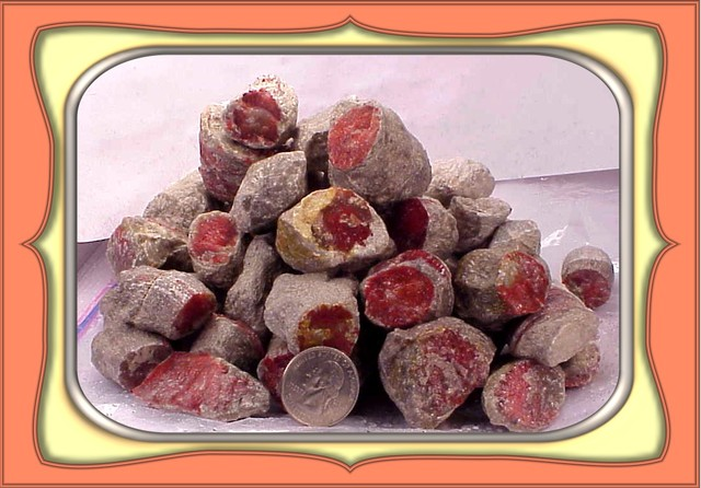 """3.0LBS  RARE FOSSILIZED UTAH RED HORN CORAL ROUGH"""" WoW"""""""