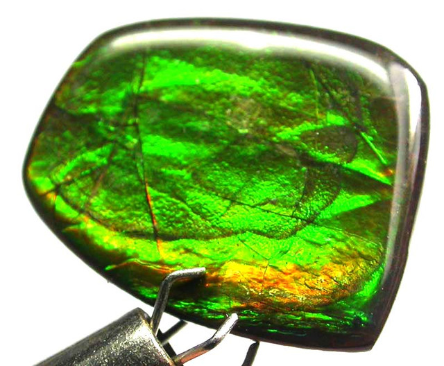 GEM QUALITY  CANADIAN AMMOLITE -POLISHED- 8.65 CTS [S5546]