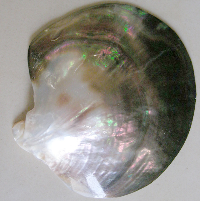 LARGE FRESH WATER PEARL 201 CARATS    90632