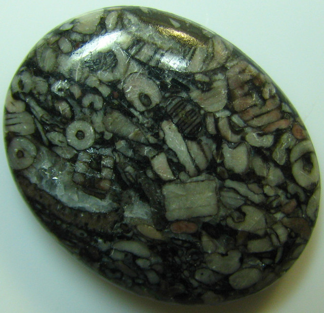 CRINOID FOSSIL CABOCHON CUT STONE 27.85 CTS