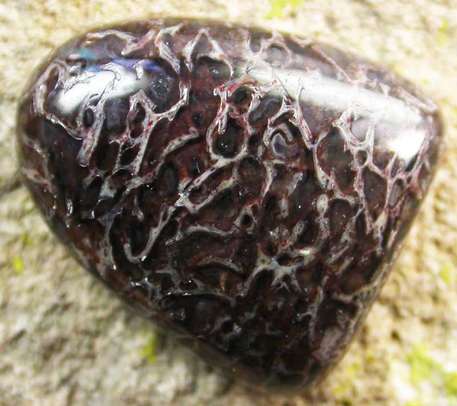 DINOSAUR FOSSIL STONES -WELL POLISHED 10.15 CTS [MX9658]