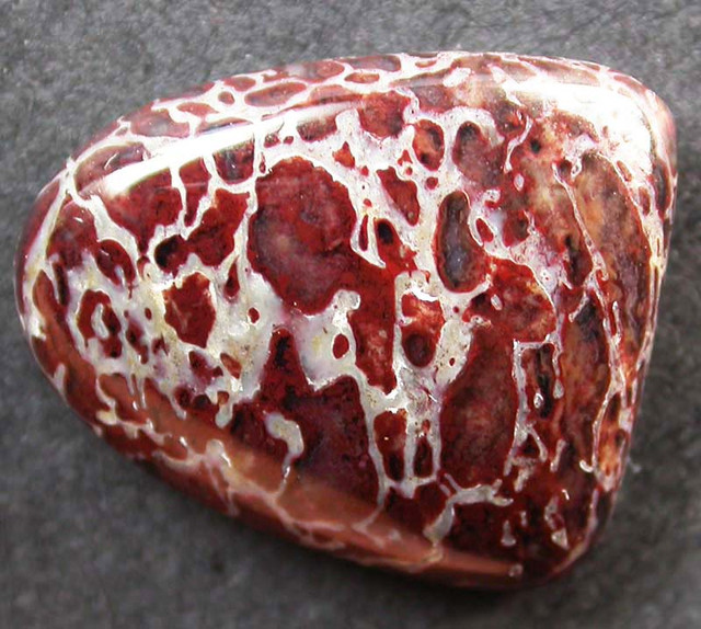 DINOSAUR FOSSIL STONES -WELL POLISHED 8.45 CTS [MX9677]