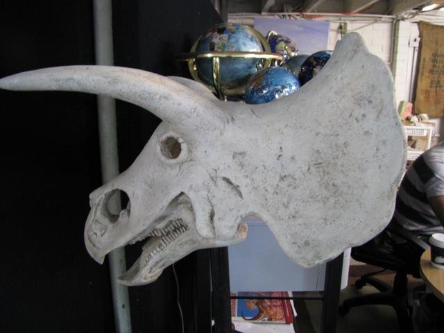 Triceratops Dinosaur Skull on base