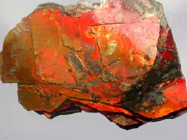 FIREY AMMONITE SPECIMEN   11.80 CTS [S463 ]