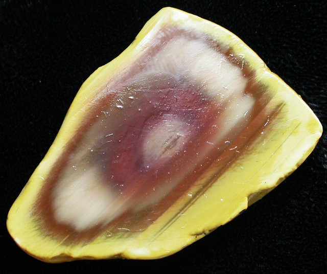 60.45 CTS IMPERIAL JASPER  SLICE FROM MEXICO [F3432]