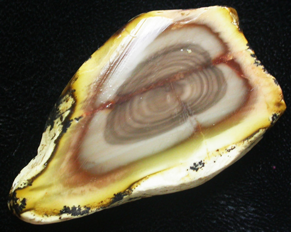 51.45 CTS IMPERIAL JASPER  SLICE FROM MEXICO [F3457]