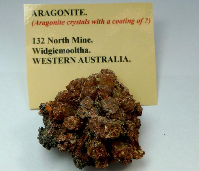 AUSTRALIAN FOSSIL ARGONAUT  441  CTS RT 1443