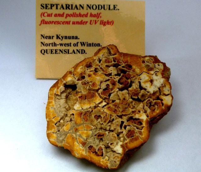 AUSTRALIAN SEPTARIAN  FOSSIL  471   CTS RT 1488