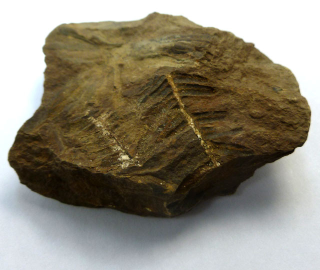 248.30 CTS USA FERN FOSSIL 300 MILLION YRS OLD MS 474