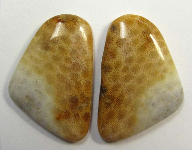 20 CTS ONE PAIR NATURAL  CORAL FOSSIL STONES MS1078