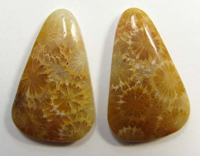 3.5 g ONE PAIR NATURAL  CORAL FOSSIL STONES MS1086
