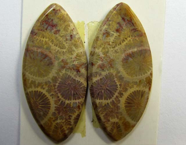 10 CTS ONE PAIR NATURAL  CORAL FOSSIL STONES MS1088