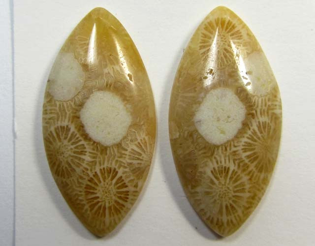 3.6 g ONE PAIR NATURAL  CORAL FOSSIL STONES MS 1089