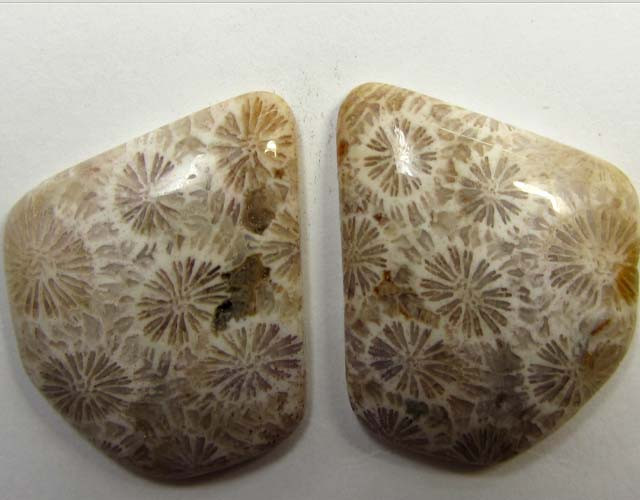 5.5 g ONE PAIR NATURAL  CORAL FOSSIL STONES MS1090