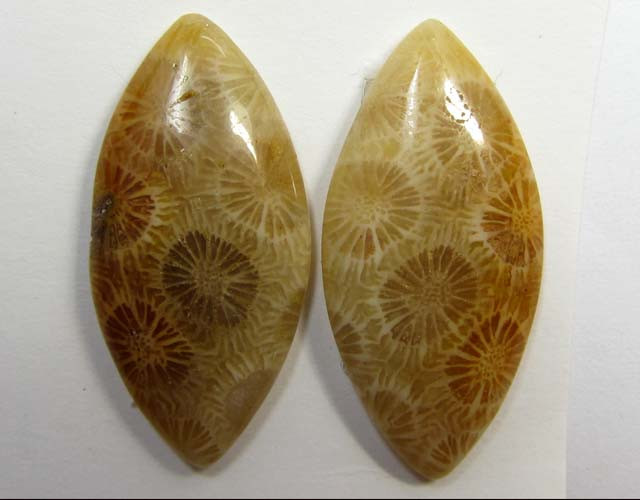 3.8 g ONE PAIR NATURAL  CORAL FOSSIL STONES MS1091
