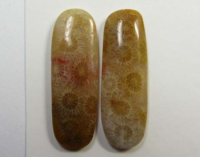 2.8 g ONE PAIR NATURAL  CORAL FOSSIL STONES MS1099