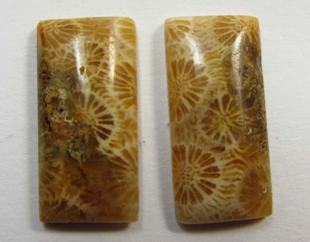 9 CTS ONE PAIR NATURAL  CORAL FOSSIL STONES MS1101