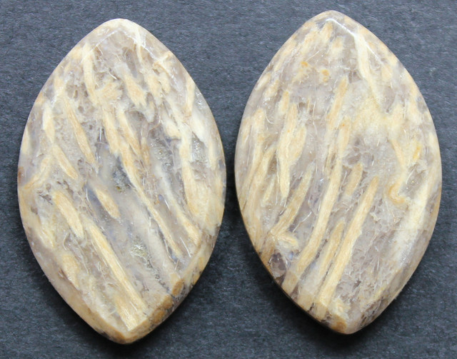 26.95 CTS FOSSIL PALM WOOD PAIR OF STONES