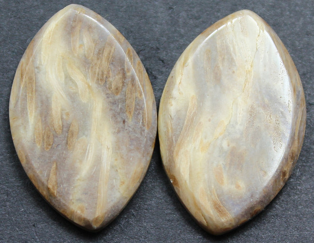 24.70 CTS FOSSIL PALM WOOD PAIR OF STONES