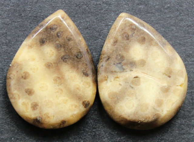 9.40 CTS FOSSIL PALM WOOD PAIR OF STONES