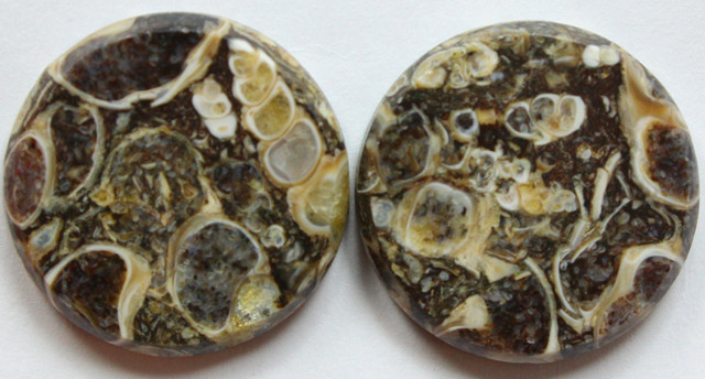 30.55 CTS CRINOID FOSSIL FLAT CAB PAIR